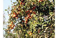 деревья абхазии