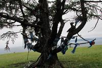 Экспедиция planetguide.ru на озеро Хубсугул. На жертвенном дереве прикреплены головы животных